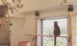 【ラブリコDIY】猫脱走防止柵作ってみた【DAIKIの工作室初体験】