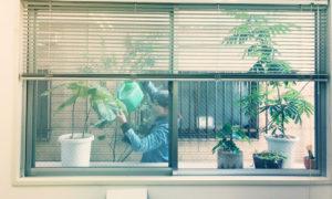 ロバ緑化プロジェクト【裏庭編2】