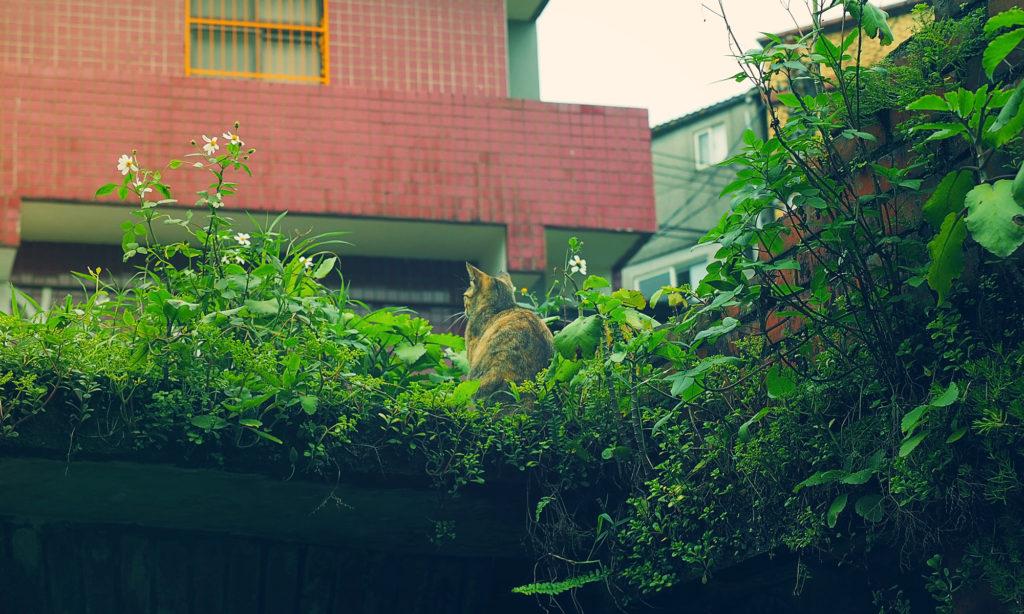 【台北旅行記】やっぱり気になるのはグリーン【思ったより緑】