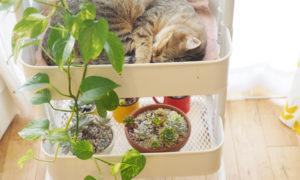 【可愛さ100倍】多肉植物×猫